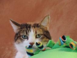 Pat Cooksey's Pet Cat Hannah